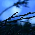 Photos: 雨が上がり