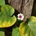 Photos: 花がひとつ