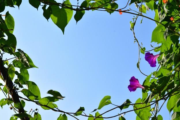 Photos: 空を囲む