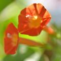 Photos: オレンジの花