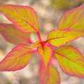 Photos: 目立つ色