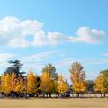 遥かなる秋