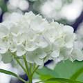 写真: ホワイト&ホワイト
