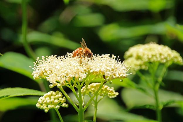 写真: ブンブンブン、ハチが飛ぶ