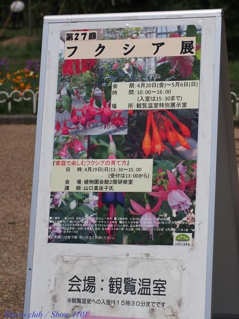 写真: 府立植物園 フクシア展 2018