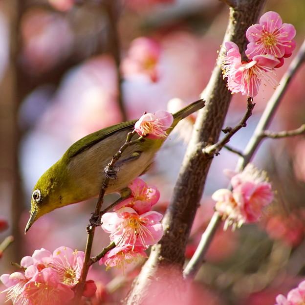 春の温もり