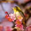 写真: 春の喜び