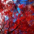 Photos: 紅