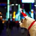 Photos: ホワイトクリスマス