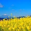 写真: 吾妻山