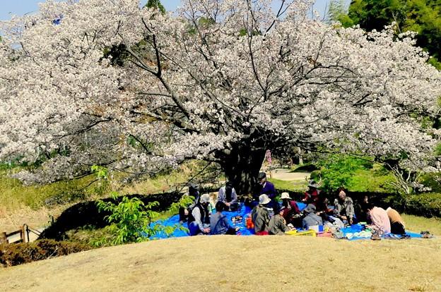 写真: 花見の宴
