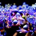 梅雨晴に紫の花昼下がり