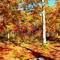 写真: 紅葉の森