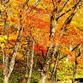 写真: 紅葉の木の下で