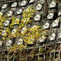 写真: 山肌いっぱいの秋の勲章