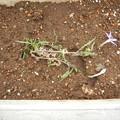 写真: 喰われつくしたイトソマ残骸