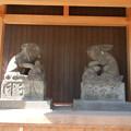 Photos: 狛兎さん、引退後?