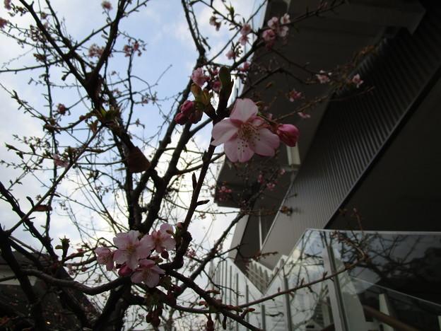 Photos: あら、お花が咲いている・・・