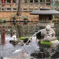 ウサギの池