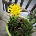 写真: サボサボの花