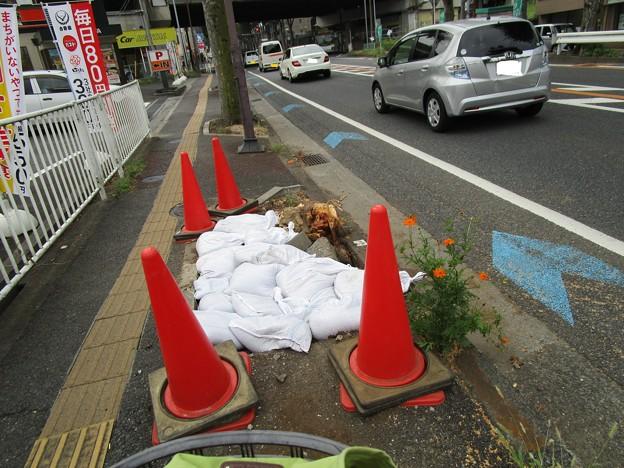 埼大通りのけやきが倒れったってΣ( ̄ロ ̄lll)