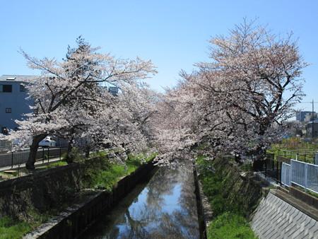 4/4鴻沼川の桜