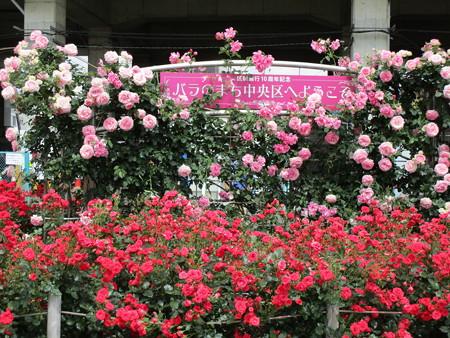 バラのまち中央区へようこそ