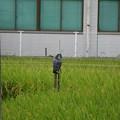Photos: 何かいる・・・