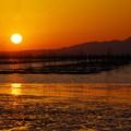 写真: 海苔の養殖場