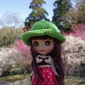 写真: 花よりブライス