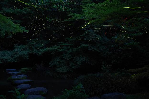 昼はトンボ夜はホタル なんて素敵な所でしょう(^^♪