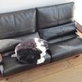 写真: ネコ家具