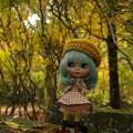 写真: 秋を満喫