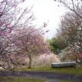 春うらら♪