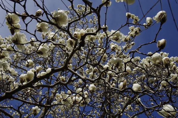Photos: 花の命は短い
