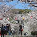 福岡西公園の桜