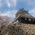 Photos: 浜松城