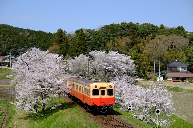 小湊鉄道飯給駅
