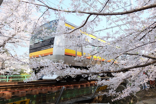 二ヶ領用水の桜と電車