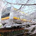 写真: 二ヶ領用水の桜と電車