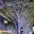 写真: 六本木けやき坂