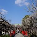 Photos: 亀戸天神にて