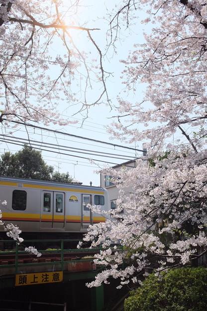 宿河原二ケ領の桜