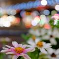 Photos: 六本木交差点にて