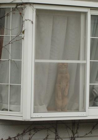 おしゃまな猫、ドルチェ