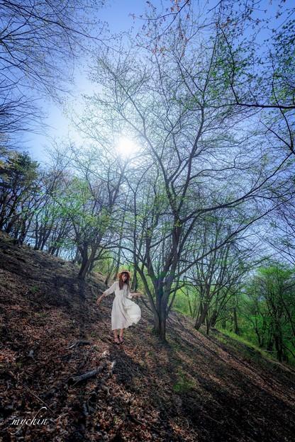 山中湖の春