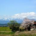 Photos: Mt.Daisen Northern wall & Cherry