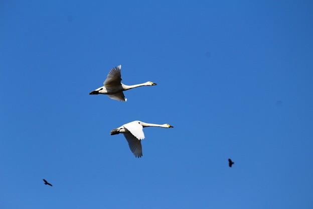 写真: 水平飛行