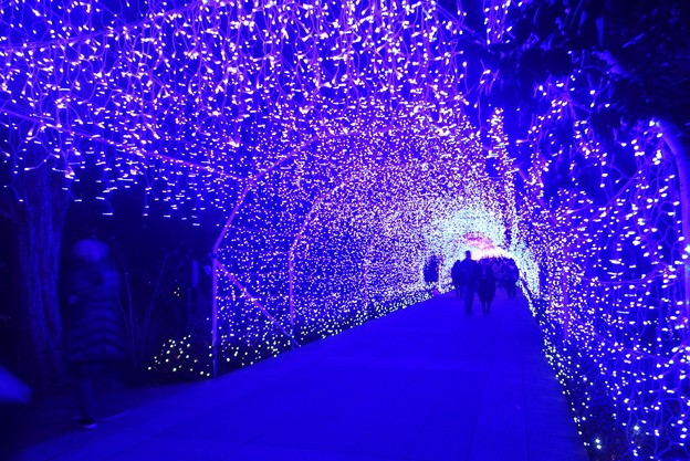 イルミネーショントンネル #湘南 #藤沢 #海 #波 #江ノ島 #enoshima #イルミネーション #バレンタイン