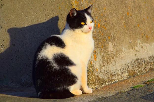 夕日を浴びるニャンコ@湘南・鵠沼海岸 #湘南 #藤沢 #海 #波 #wave #surfing #mysky #animal #cat #猫